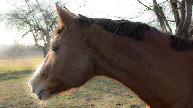 Horse in Northern Holland by Boris Vargovic, free photo, wallpapers, images