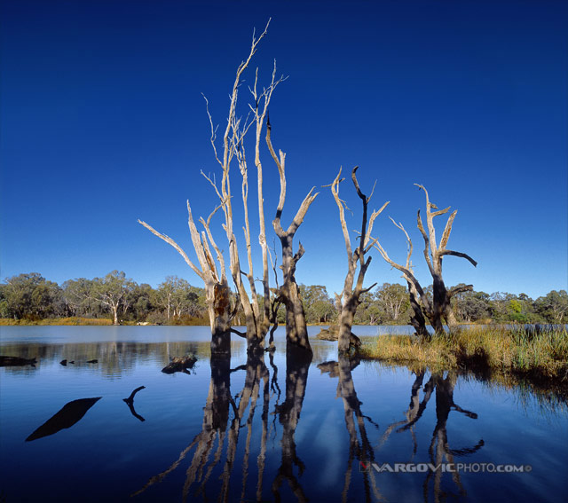 Ghosts-On-The-Water_Australia_Murray-River_Kings-Billabong_Vargovic-Photo