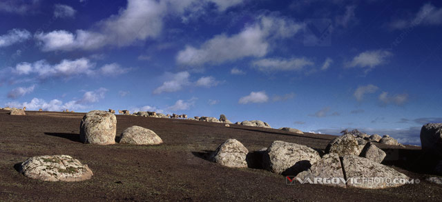 Under-The-Blue-Sky_Australia_Victoria_Sheep_Down-Under_Oz_Vargovic-Photo