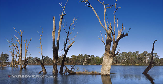Winter-On-The-River_Australia_Murray-River_Kings-Billabong_Trees-In-Oz_Vargovic-Photo
