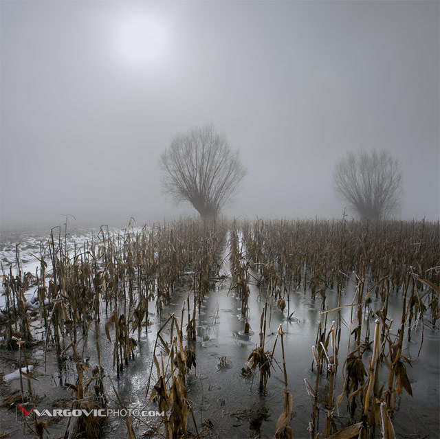 Here-Comes-The-Sun_Sigetec_Podravina_Croatia_Corn-Field_Frozen-Corn_Autumn-Fog_Winter-Fog_By-Vargovic-Boris