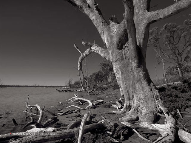 Gone-Walkabout_Australia_Murray-River_Mildura_Kings-Billabong_Irymple_Vargovic-Photography_Sepia