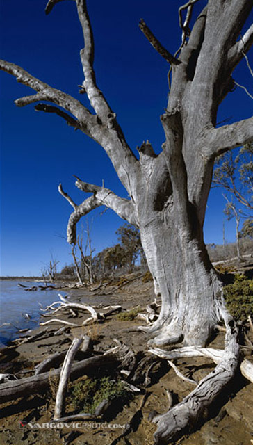 The-Lost-In-Time_Australia_Murray-River_Mildura_Kings-Billabong_Irymple_Vargovic-Photography
