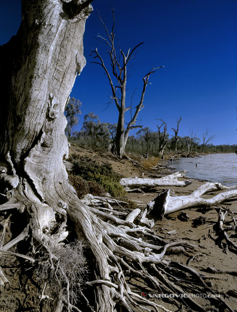 Wake-Me-Up-When-Spring-Come_Australia_Murray-River_Down-Under_Mildura_Iryimple_Vargovicphoto