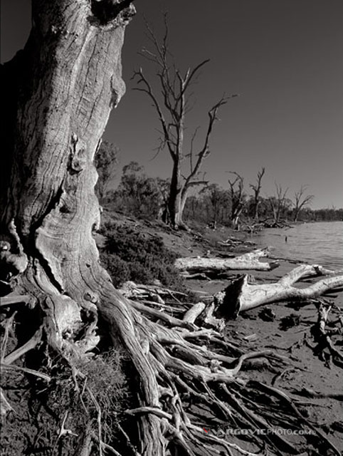 Wake-Me-Up-When-Spring-Come_Australia_Murray-River_Down-Under_Mildura_Iryimple_Vargovicphoto_Sepia