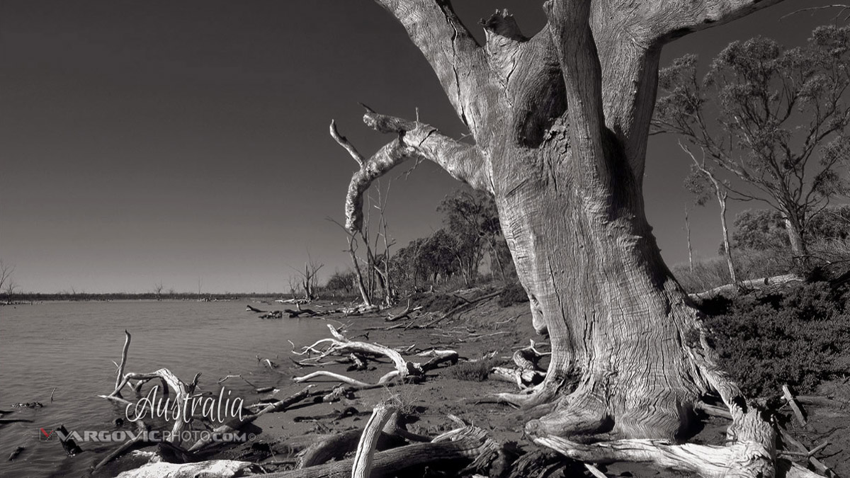 Gone Walkabout Australia Murray River Mildura Kings Bollabong Irymple By Vargovic Photography